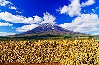 北海道 冠雪した羊蹄山と収穫されたビートの山