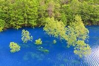 秋田県 宝泉湖と立木