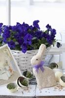 ウサギとパンジー