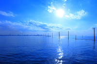 千葉県 木更津市 海上に並ぶ電柱 江川海岸