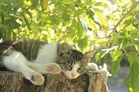 愛知県 江南市 猫