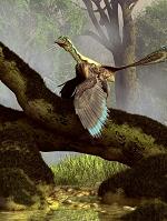 CG 始祖鳥