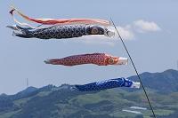 青空になびく鯉のぼり