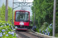 神奈川県 箱根のあじさい電車