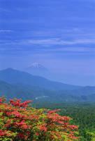 山梨県 美し森のツツジと富士山