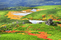 北海道 大雪山の紅葉