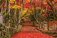 滋賀県 秋の鶏足寺