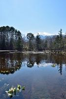 長野県 乗鞍高原 どじょう池より水芭蕉と乗鞍岳