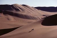 ナミビア ナミブ砂漠 斜面を走るオリックス