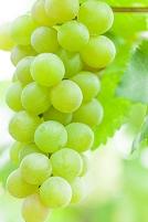 ワイン畑の葡萄