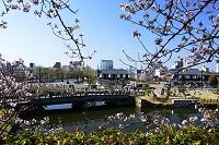 姫路 姫路城 西の丸庭園から桜田門橋見る