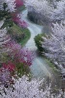 韓国 慶南