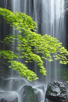 日本 新緑の達沢不動滝