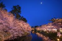 青森県 弘前公園の夜桜