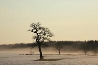 朝霧と一本木