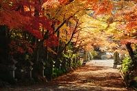 滋賀県 胡宮神社