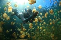 パラオ マカラカル島 ジェリーフィッシュレイク