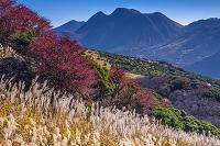 大分県 牧ノ戸峠 ススキと三俣山