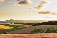北海道 美瑛の丘 麦畑の夕焼け
