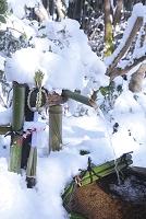 京都府 雪の祇王寺
