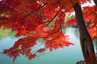福島県 五色沼 弁天沼 湖 紅葉