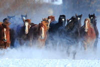 北海道 十勝牧場 馬の追い運動