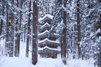 山形県 羽黒山の五重塔の冬