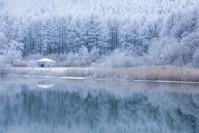 長野県 中牧湖と霧氷の林