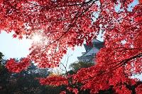 紅葉した大阪城公園と大阪城天守閣