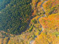 鳥取県 大山 森と道