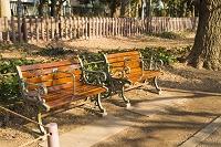 銀杏並木 ベンチ