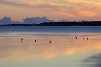 北海道 朝焼けのサロマ湖とアオサギ