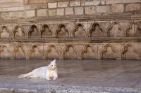 ドゥブロヴニク 史跡に横たわる白ネコ