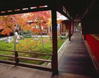 京都府 建仁寺庭園の紅葉