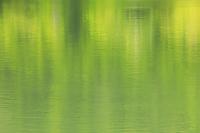新緑を映す水面