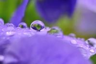 水滴 花 雨