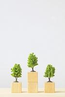 積み木とミニチュアの木