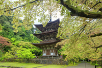 滋賀県 萌黄の西明寺 三重塔