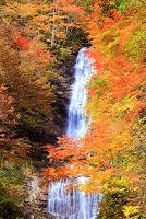 長野県 王滝村 唐沢の滝