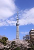 東京都 隅田公園からのスカイツリー