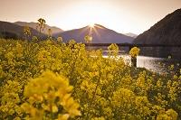 高知県 夕日の菜の花と三里沈下橋