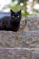 岐阜県の猫