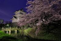 埼玉県 忍城の夜桜