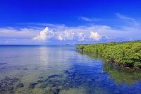 沖縄県 ゲーダ川河口とマングローブ林 西表島
