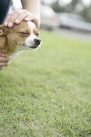 犬の頭を撫でる手