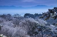 奈良県 雪の金剛山(奈良方面を展望)