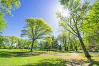 セントラルパーク 太陽に照らされる新緑の大木の下でブランコを...