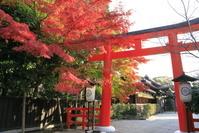 京都府 紅葉の下鴨神社