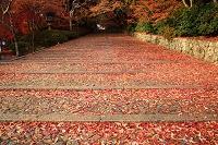 京都府 光明寺の紅葉