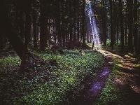 森のわだちに差し込む日差し